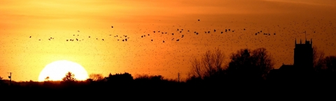 Sunset with flying birds