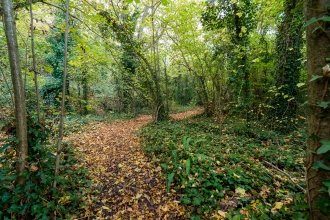 Thurlbear Wood leafy path Matt Sweeting