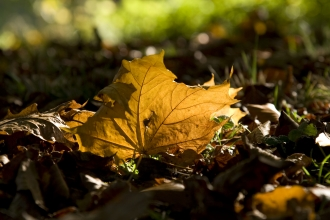 Autumn leaf sunlight Ben Simmonds