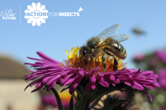 action for insects banner