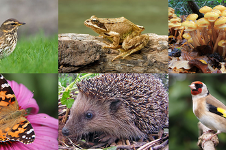 The Great Somerset Wildlife Count header