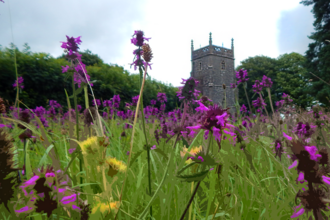 purple stylised flowers in the foreground with a out of focus church in the back