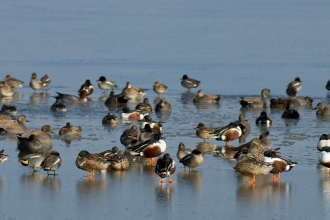 Shovelers and more