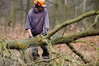 Reserve staff thinning woodland using a chainsaw wearing personal protective equipment