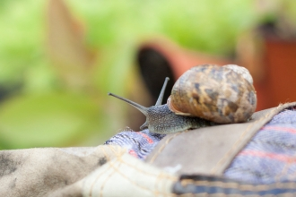 Snail on gardening gloves