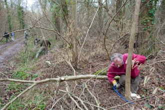 volunteers coppicing hazel