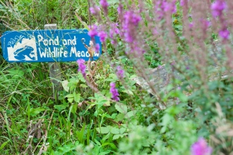 A wildlife garden with purple flowers and a sign reading 'pond and wildlife meadow'