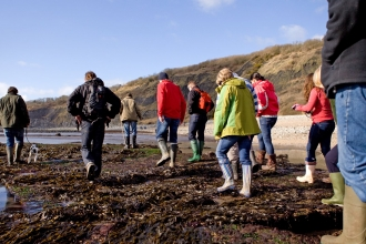 People taking part in a coastal foraging walk on the seashore