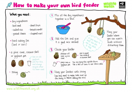 bird feeder wildlife trust