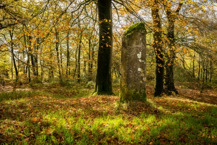 Standing stone at beacon hill woods