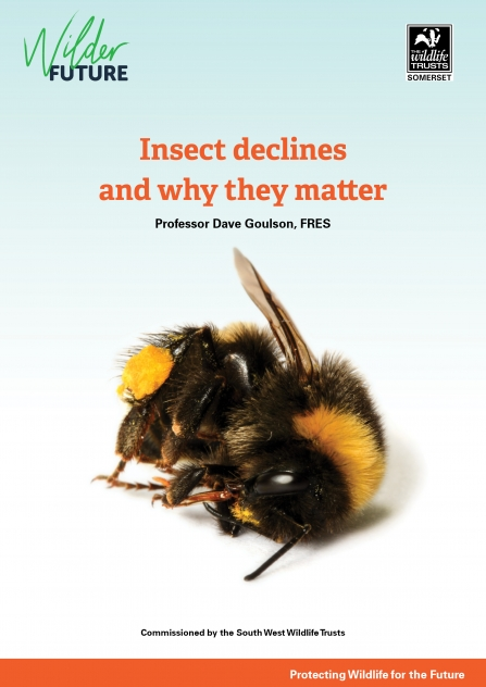 Action for insects report