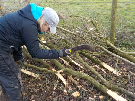 Hedgelaying volunteer session