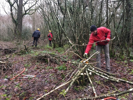 Coppicing- protecting the coppiced stools from browsing deer