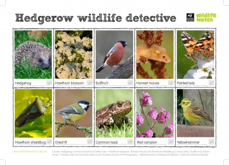 Hedgerow wildlife detective