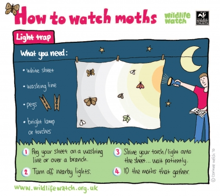 How to watch moths - light trap