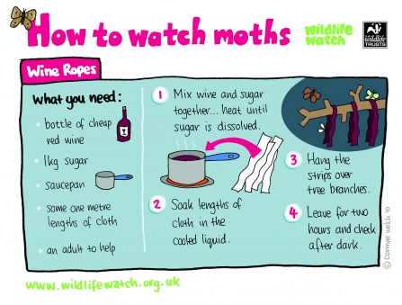 How to watch moths - Wine ropes