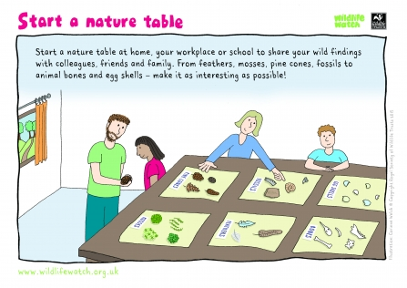 start a nature table