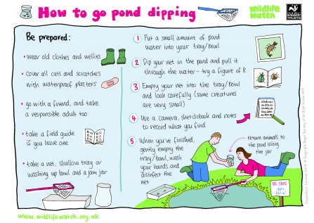 How to go pond dipping