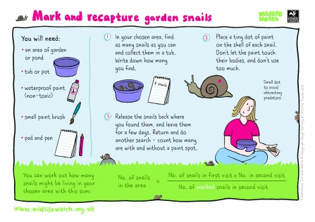 Mark and recapture snails
