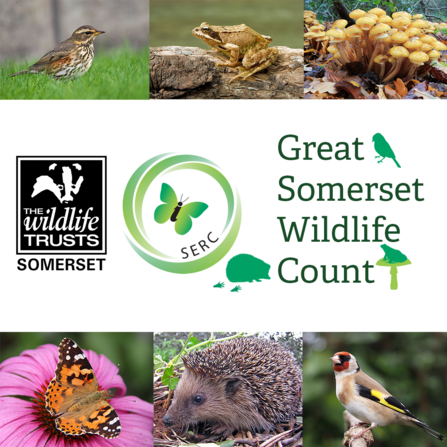 The Great Somerset Wildlife Count