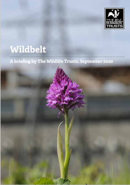 Wildbelt publication cover