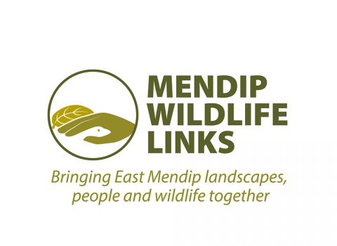 Mendip wildlife links logo