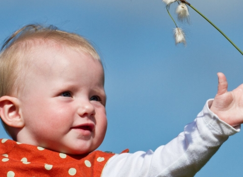 baby reaching out for cotton grass